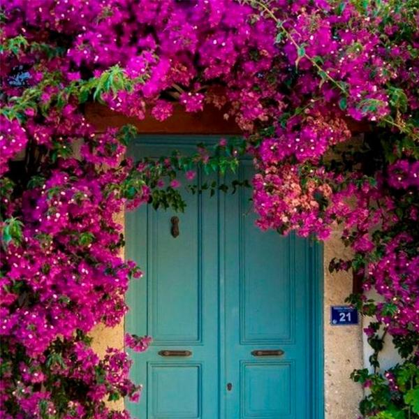 color buganvilla con azul inspiración y tonos